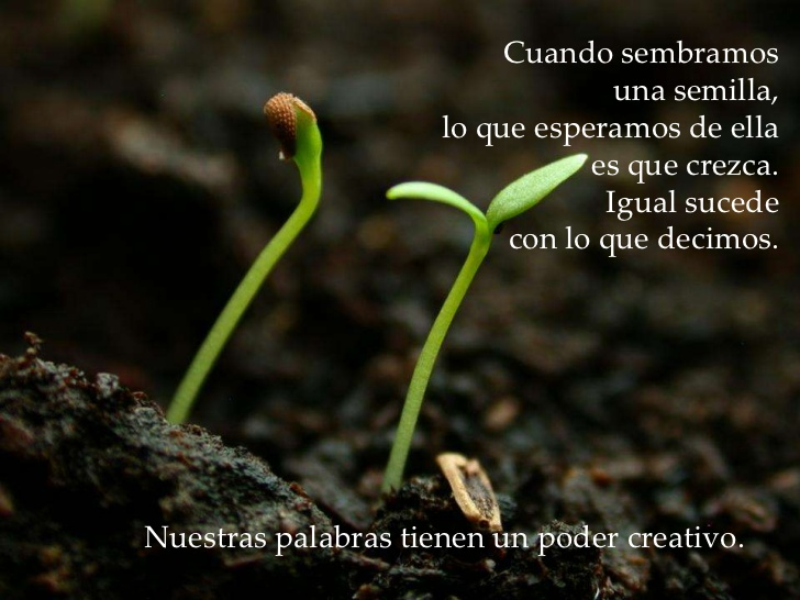 Las palabras son como semillas porque…